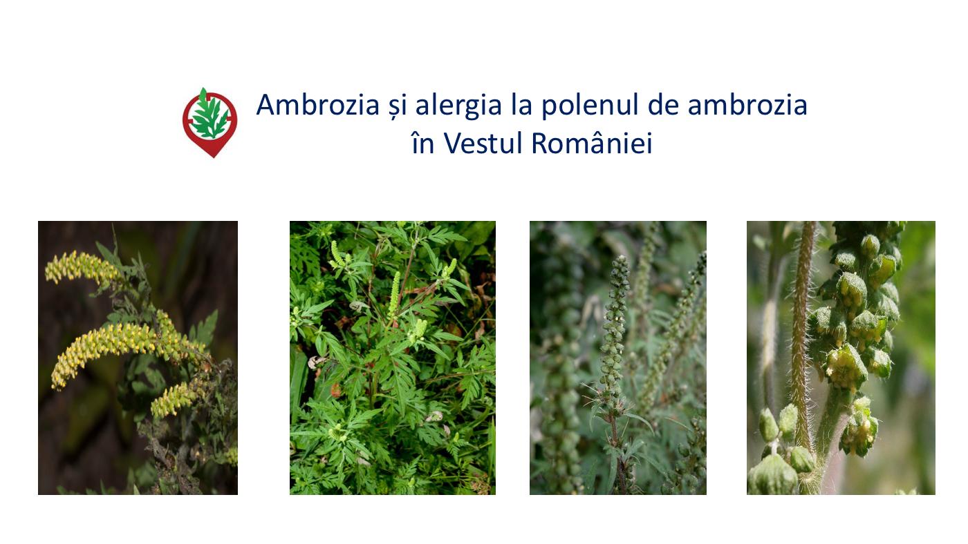 Ambrozia și alergia la polenul de ambrozia în Vestul României